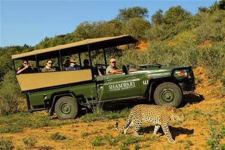 Shamwari safari leopard