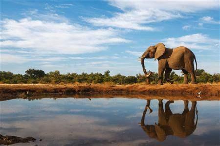 elephant reflection safari