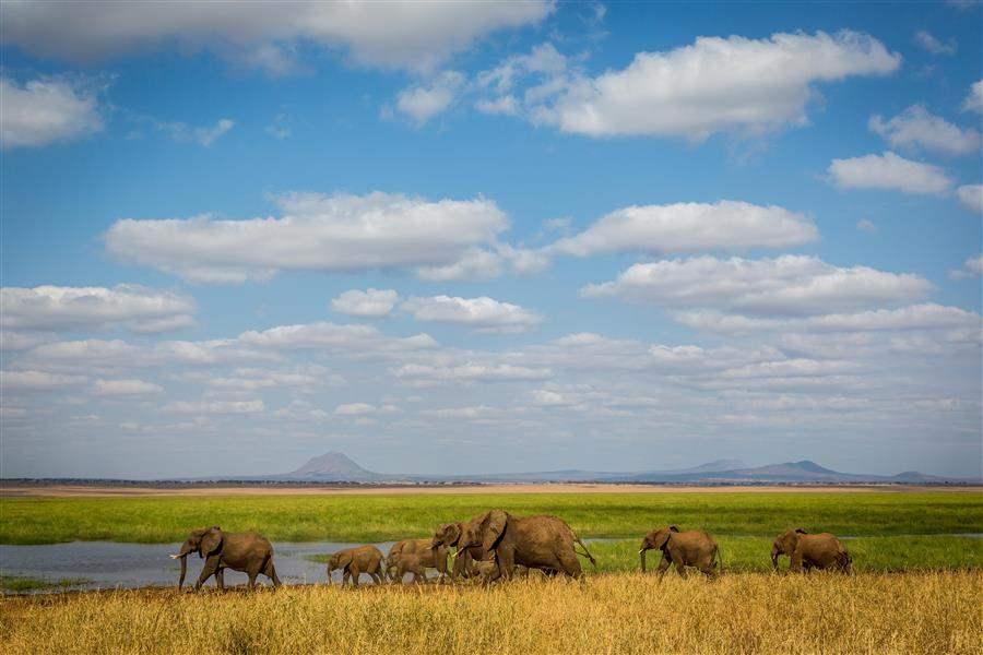 Tanzania_Tarangire