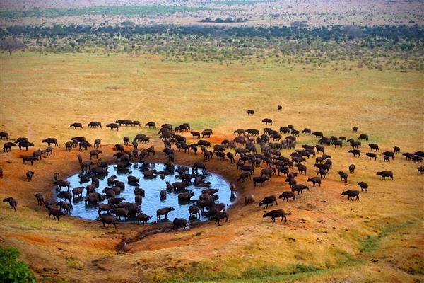 Tanzania_MasaiMara