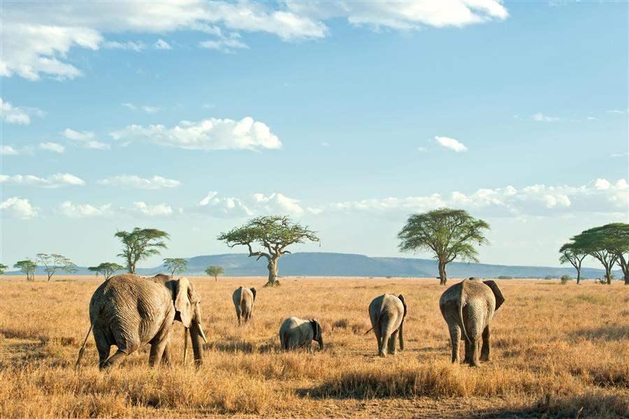 Tanzania_SerengetiPlains