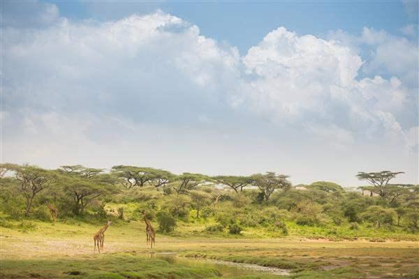 Tanzania_SerengetiPlain