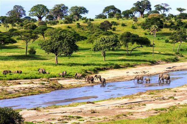 Tanz_elephants