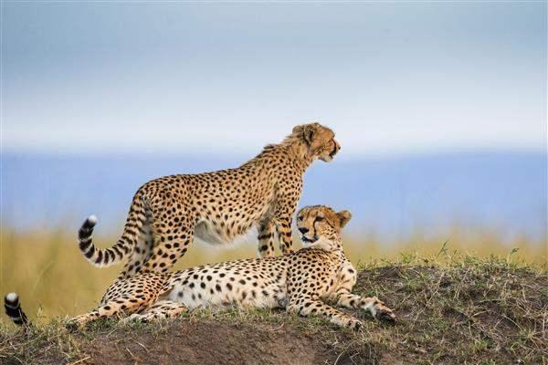 SerengetiPembaFlyDrive