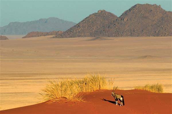 Desertlandscape