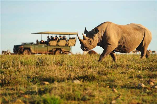 SafariRhino