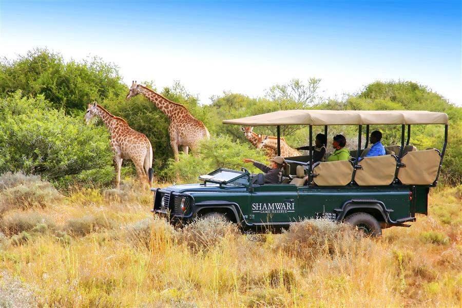 Shamwari Riverdene Lodge Jeep Safari Giraffe