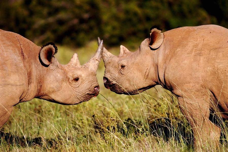 Shamwari Riverdene Lodge Rhinos