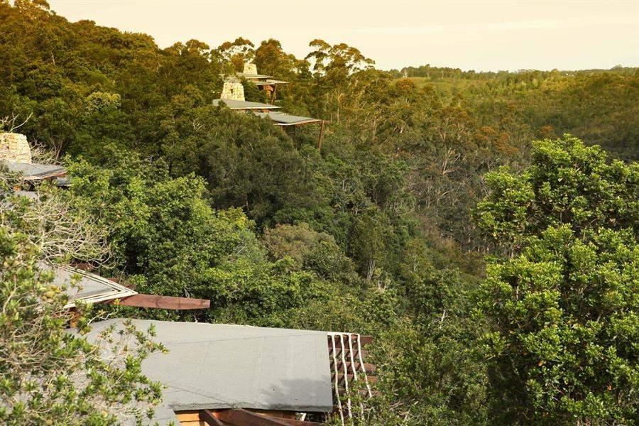 Tsala Treetop Lodge Aerial
