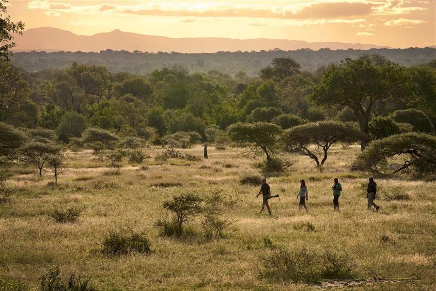 Lion Sands Ivory Lodge Walking Safari