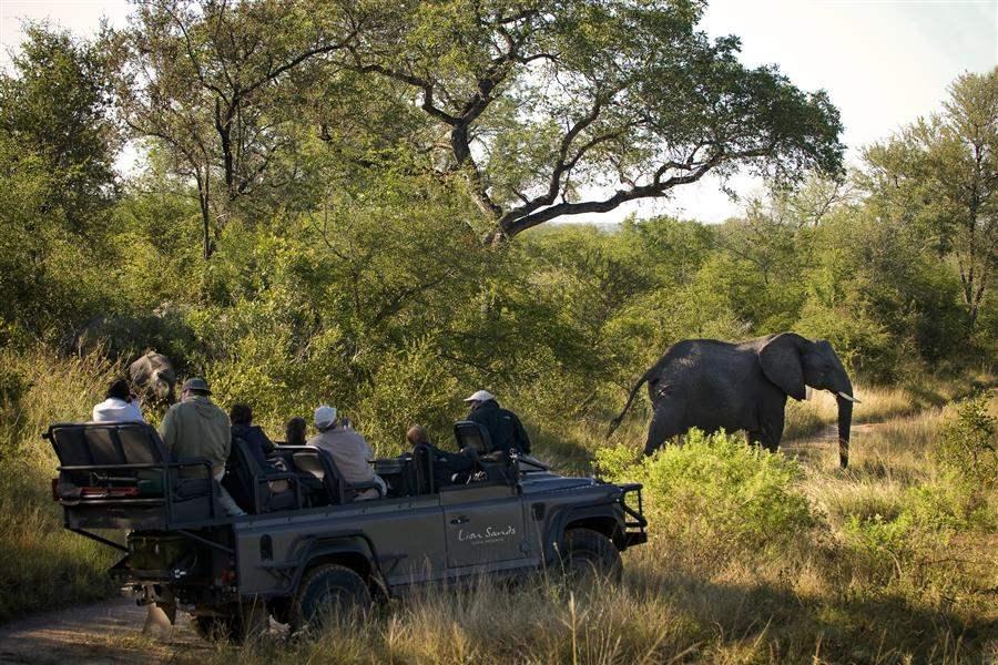 Lion Sands Ivory Lodge Jeep Safari Elephant