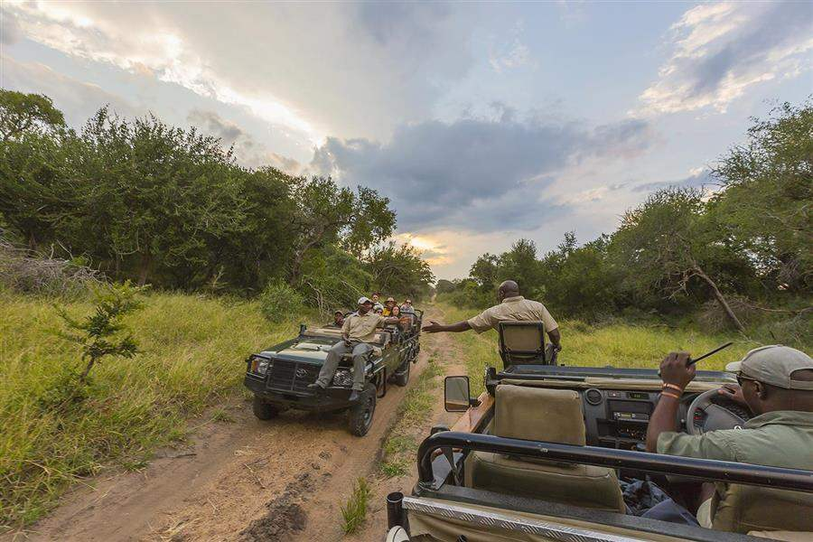Thornybush Game Lodge Jeep Safari