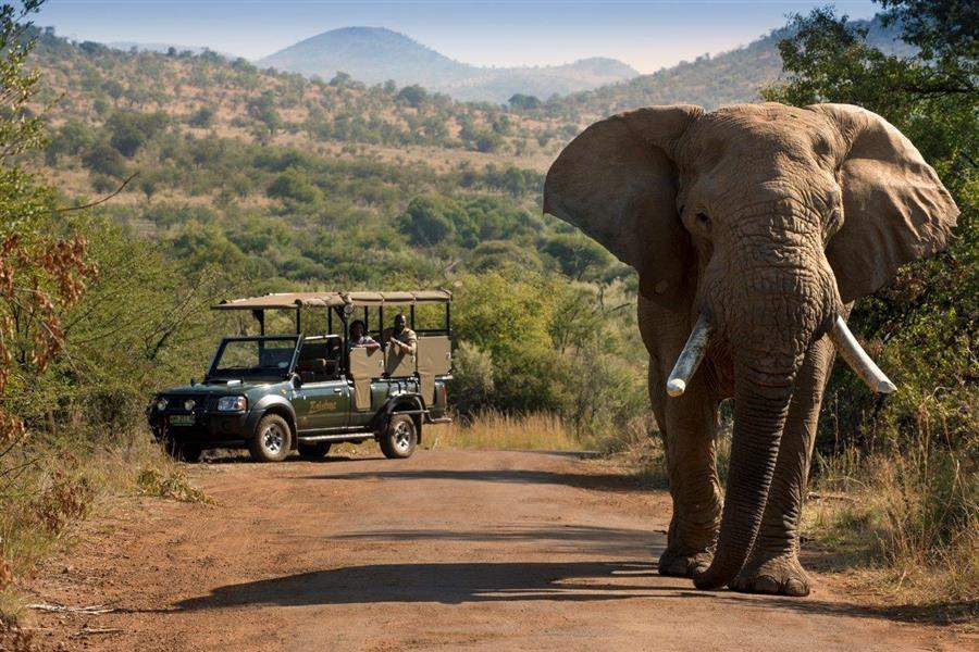 Bakubung Bush Lodge Elephant Jeep