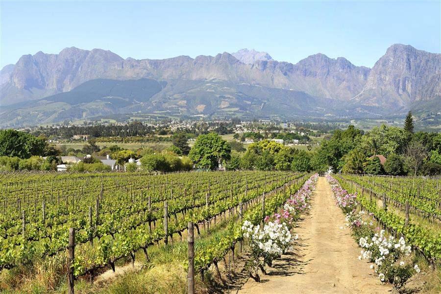 Grande Roche Vineyards