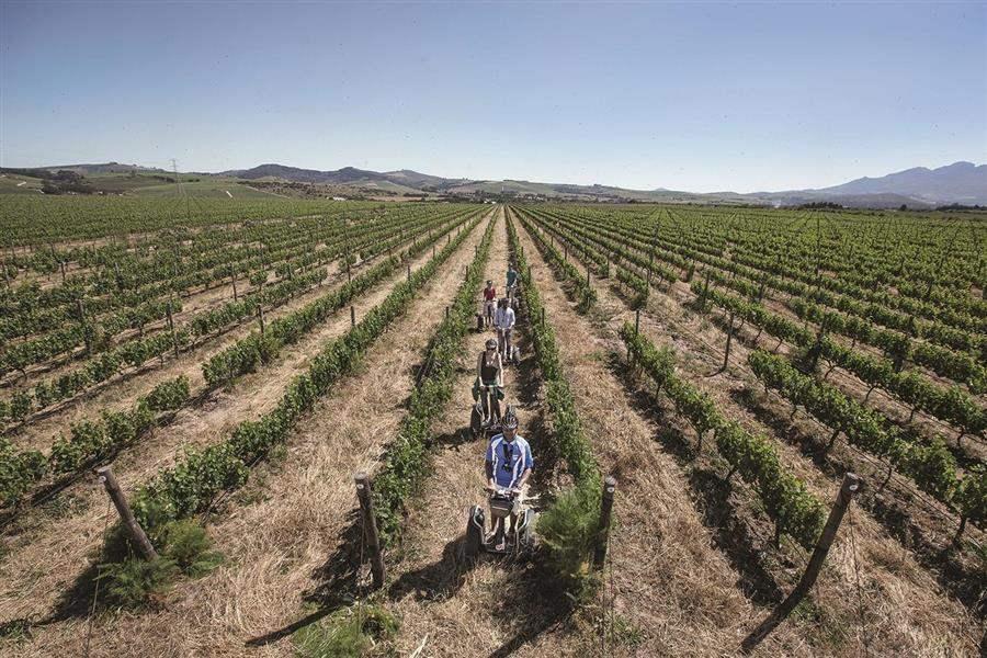 VineyardTours