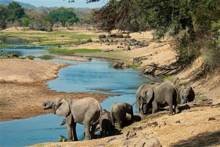ElephantsDrinking