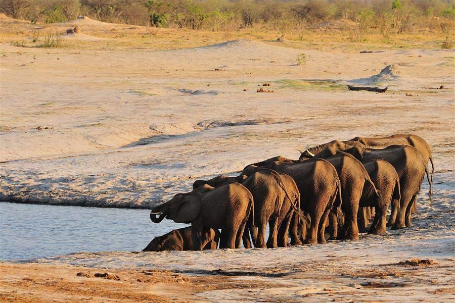 Elephants in Hwange