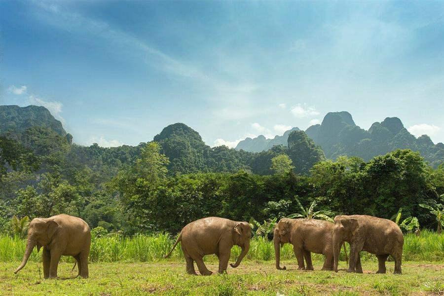ElephantHills