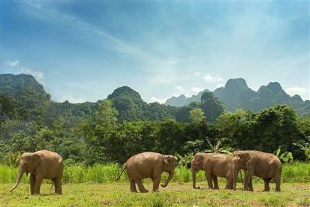 ASI-205169-ElephantHills