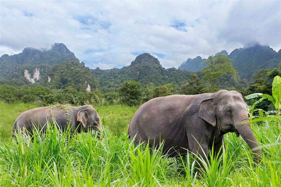 ElephantHills3