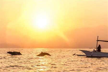 Bali_Lovina_Dolphin (1)