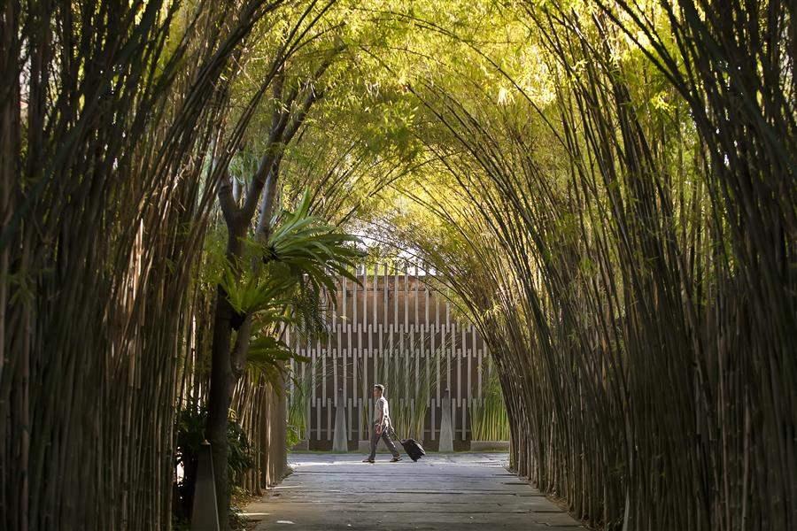 Entrance bamboo (1)
