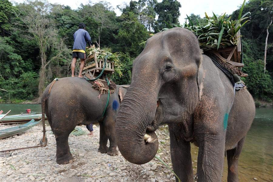 Laos luang prabang elephants 9