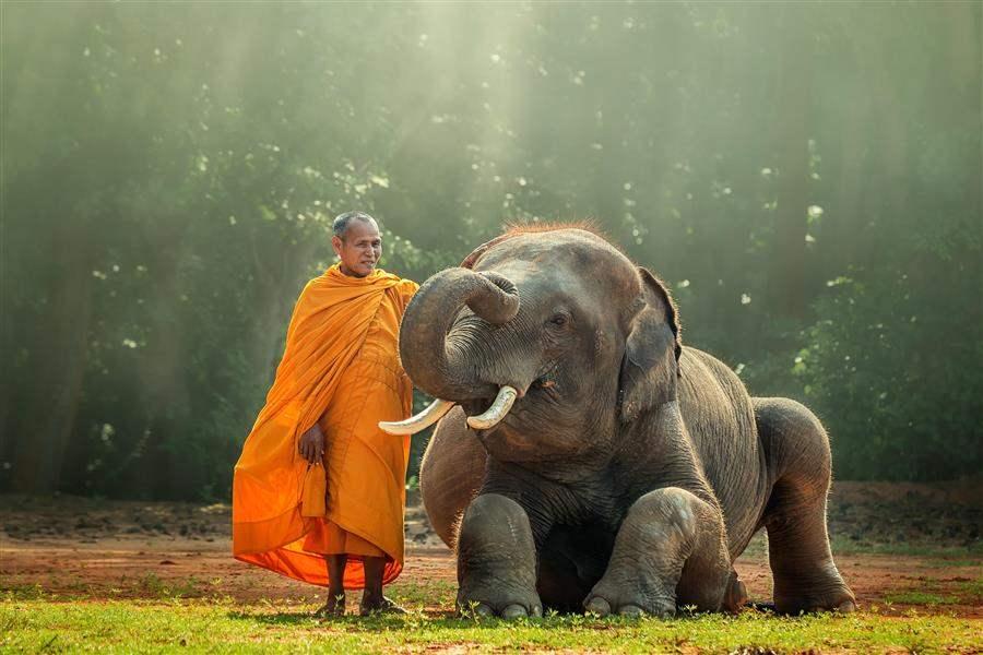 laos elephant 1