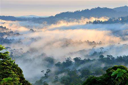 BorneoRainforestView