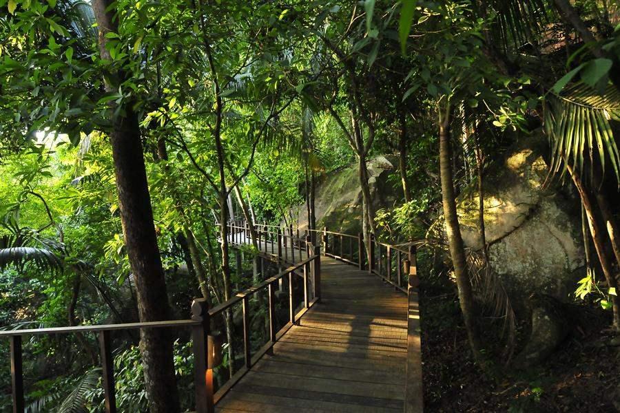 Japamala Resort Forest Walkway