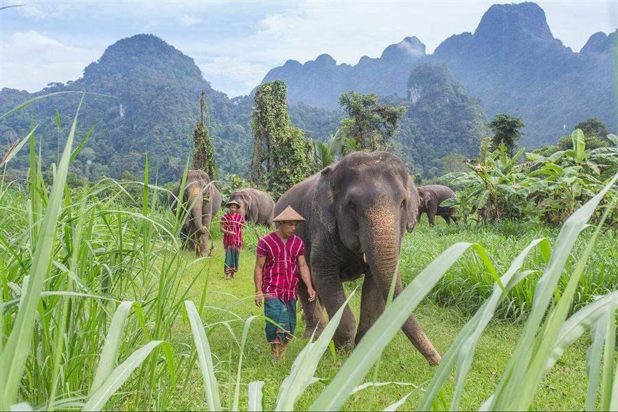 Elephant Hills Elephant