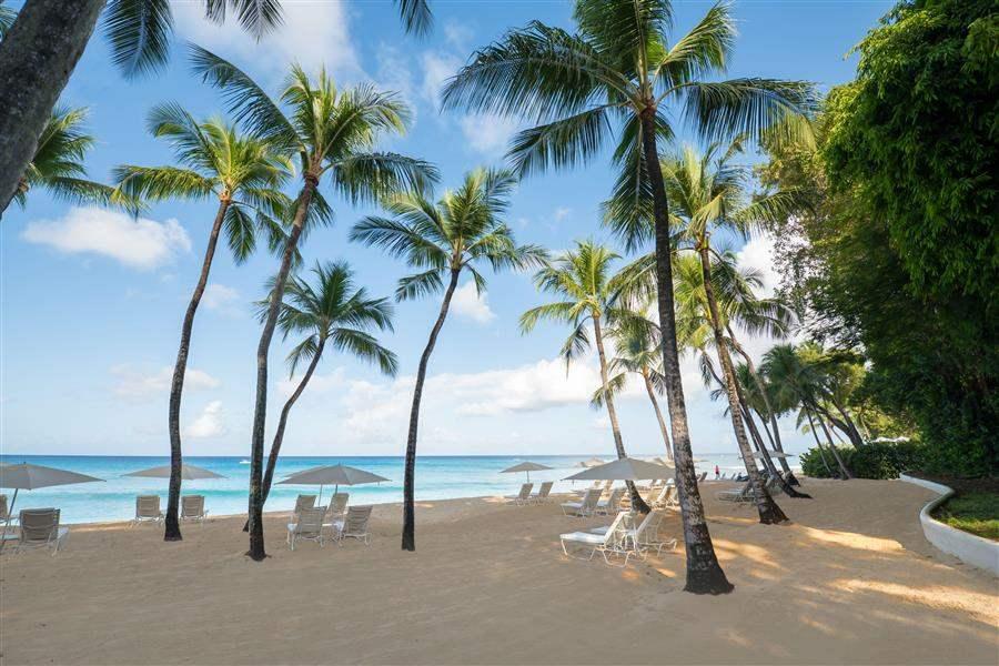 Royal Pavilion Beach Palms