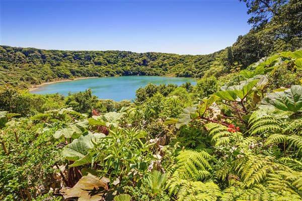 Lush vetegation around tropical pool costa rica