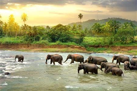ElephantHerd