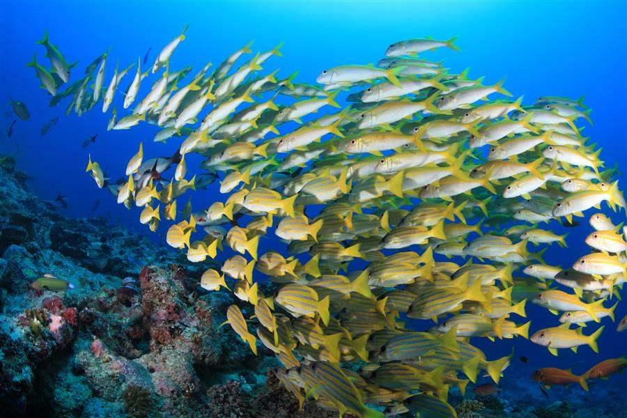 Maldives Dining Fish