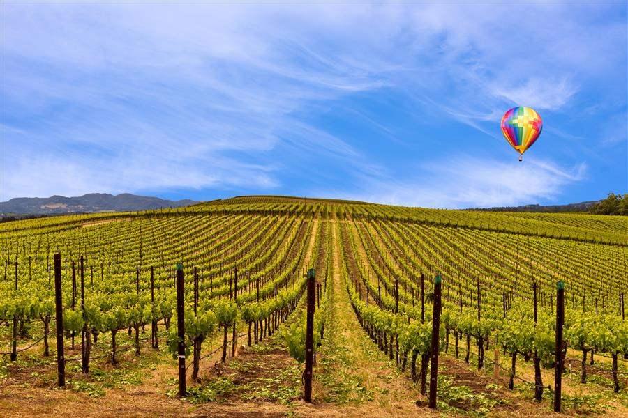 Sonoma hot air balloon california wine