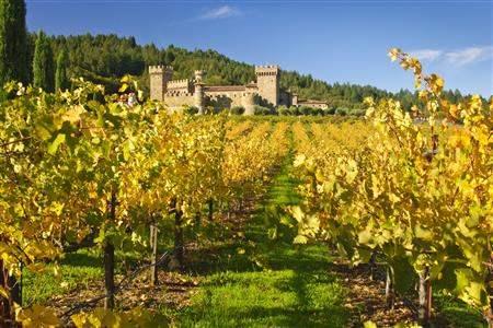 Napa vineyard California usa