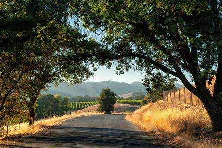Sonoma wine country road california