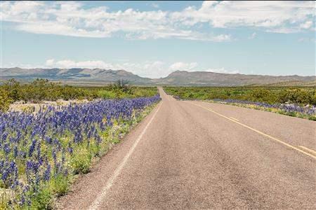 Texas blue bonnets road