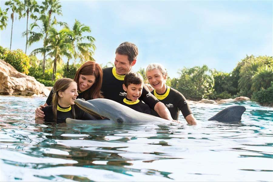Discovery Cove Dolphin Swim Orlando