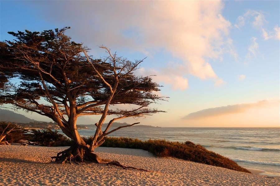 Carmel, Monterey & Big Sur