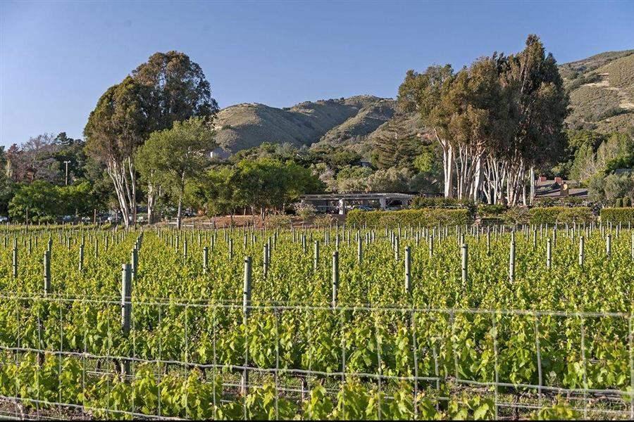Bernardus Lodge Vineyards