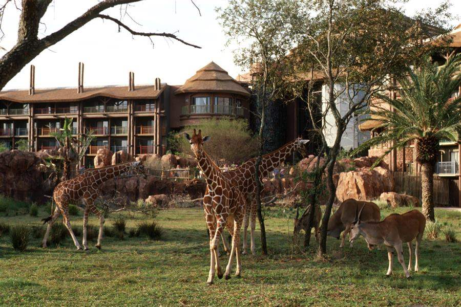 Disneys Animal Kingdom Lodge Hotel Outdoors