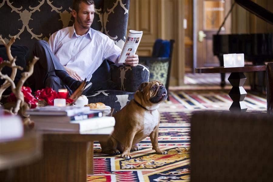 Dog in Lobby